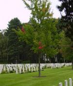 Brookwood Military Cemetery