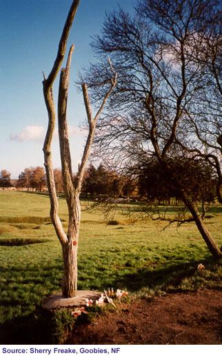 The Danger Tree, Beaumont Hamel, France