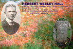 Photo of Herbert Hall– Composite image of Herbert Hall, grave site and poppy field. (In memory of Herbert Hall)