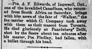 Newspaper clipping– This item appeared on page 1 of the Northern Advance newspaper (Barrie, Ontario) on 30 August 1900.  Apparently Private Findlay was the keeper of Walker, a fox terrier which was the mascot of C Company, 2nd (Special Service) Battalion, Royal Canadian Regiment of Infantry; and it seems that the dog accompanied him onto the field of battle and was killed too.