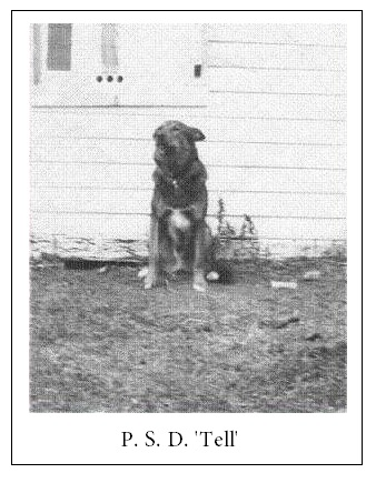 """Dog """"Tell""""– Photo courtesy of www.rcmpgraves.com"""
